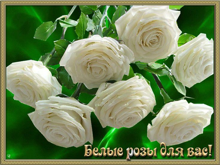 Белые розы открытки гиф, рожденным ссср мая