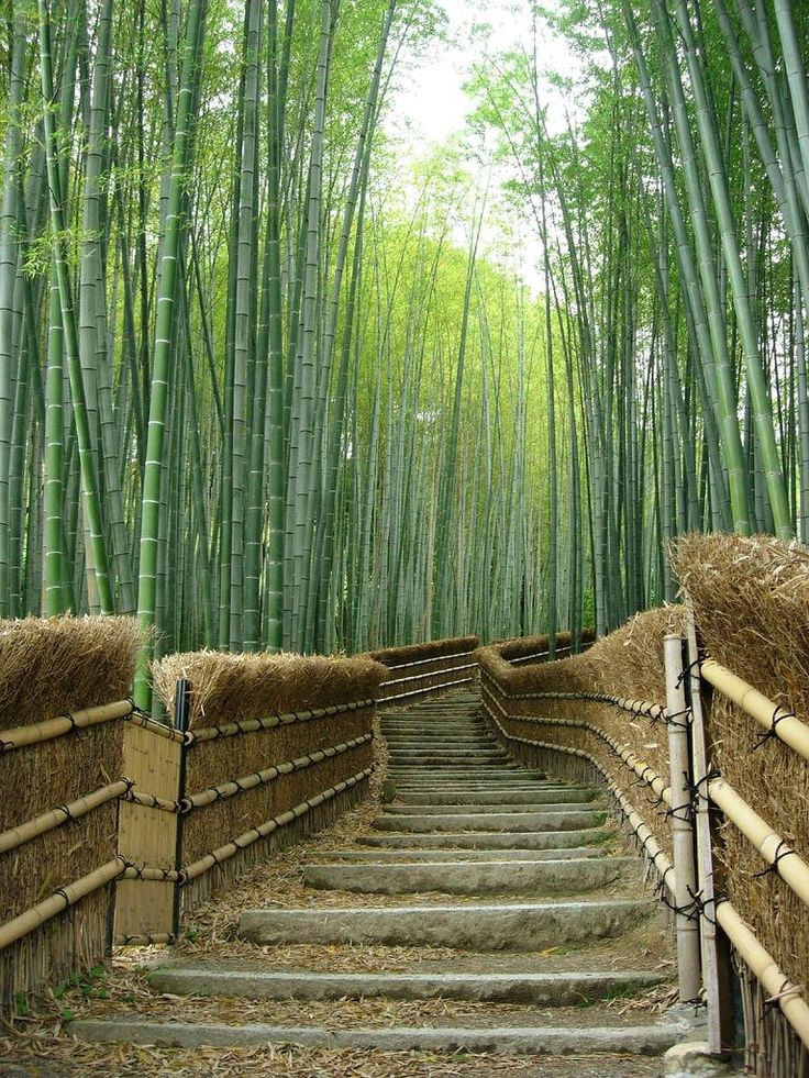 Bamboo Trees at the Adashino-nenbutsuji Temple, Kyoto, Japan