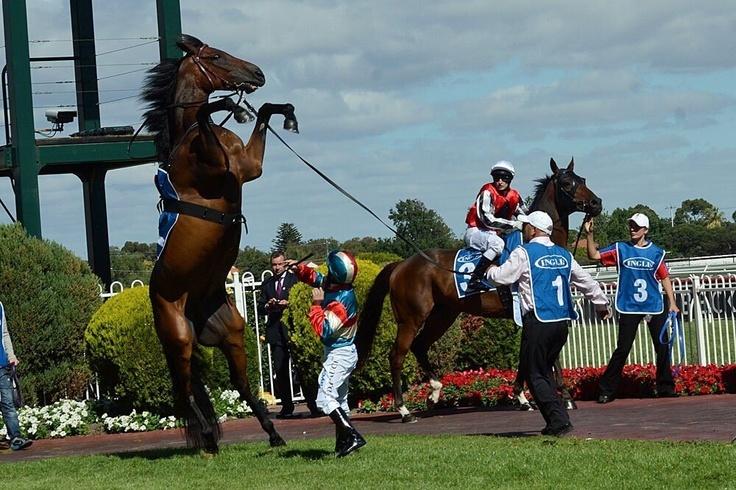 Caulfield Racecourse. Melbourne. Australia.