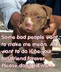 pitbull dog quotes - Google Search