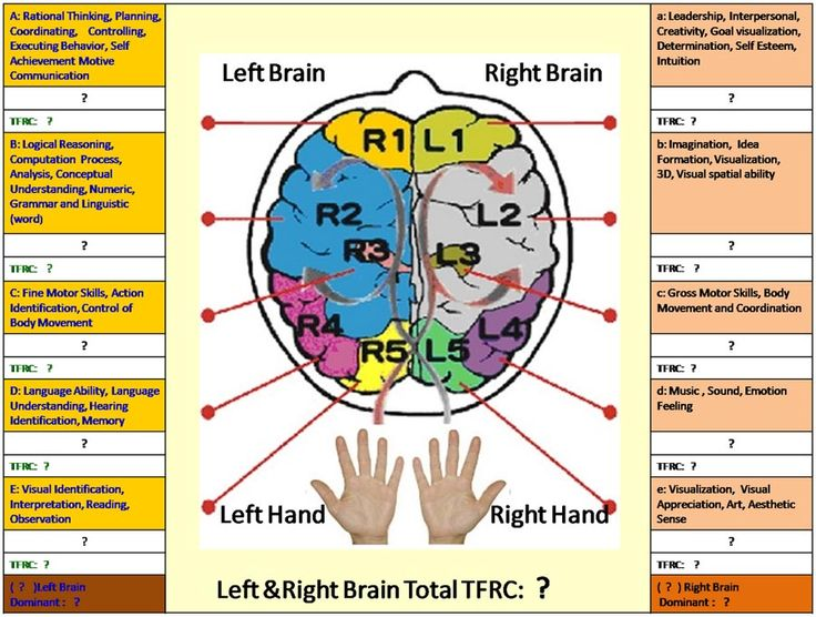 The finger-brain lobe connections according Esther Cheang ...