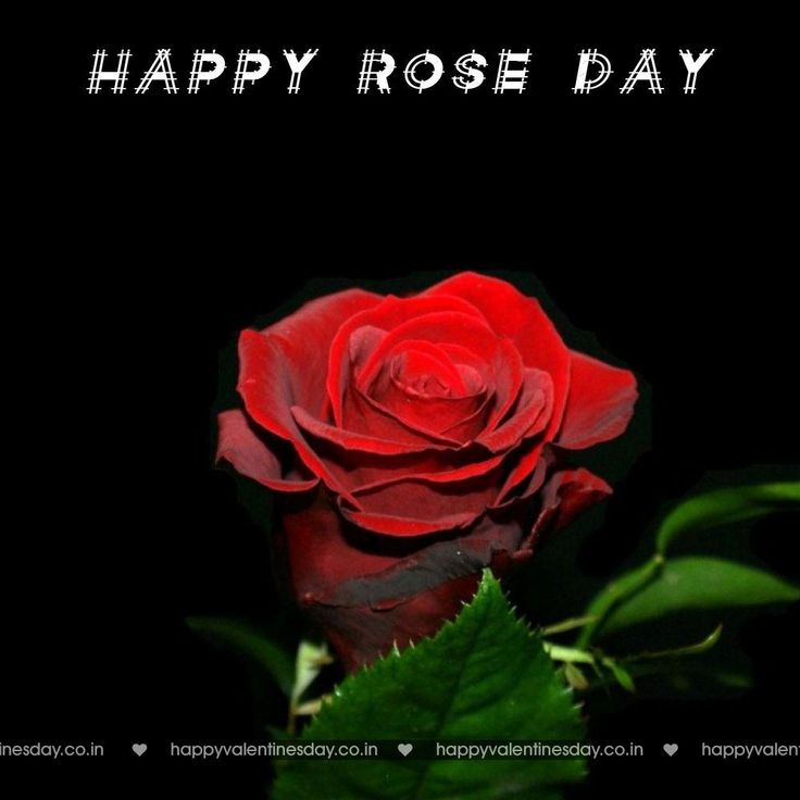 rose day valentines day ecards free httpwwwhappyvalentinesday - Free Ecards For Valentines Day