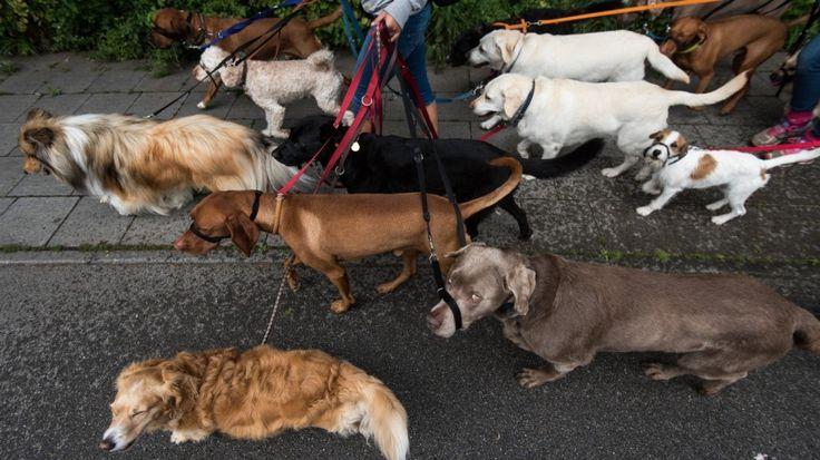 Nach Hunde-Attacke: Her mit dem Hunde-Führerschein! - München ...  Nach der Attacke eines Schäferhunds auf zwei Mädchen, ist es leicht, nach Leinenzwang zu rufen. Ein Hunde-Führerschein würde helfen.