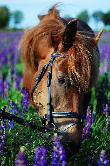 Horse in purple flowers