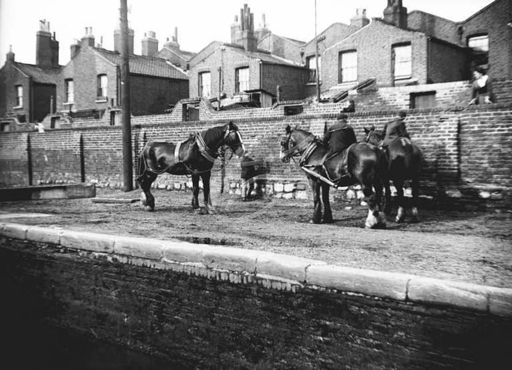 Horses used for towing resting by the side of the Regents canal, c1905.