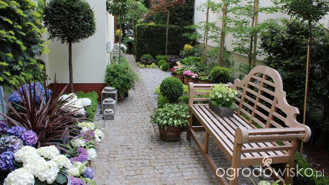 Ogród nie tylko bukszpanowy - część II - strona 343 - Forum ogrodnicze - Ogrodowisko