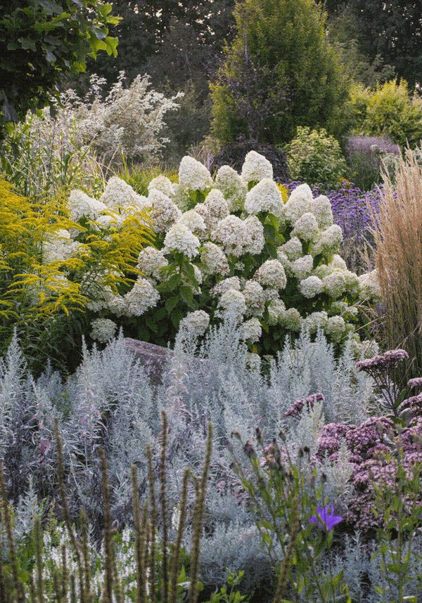 Hydrangea paniculata `Lemon Lime' puts on a good show in this late season planting.