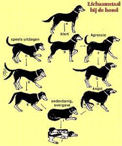 Lichaamstaal bij honden.