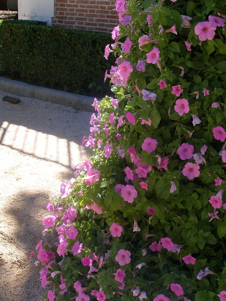 169 best plantas ornamentales trepadoras images on