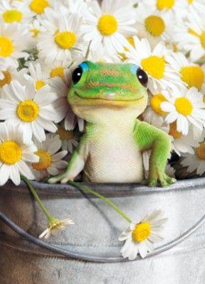 *Flower Girl