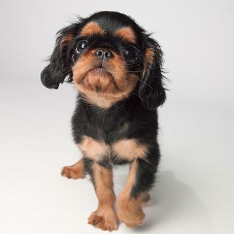 Montgomery Ashton, (AKA Monty), Petplan pet insurance Curator of Treats
