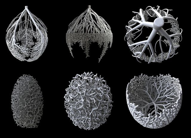 Nervous System: hyphae system | Flickr - Photo Sharing!