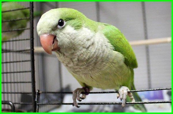 5 Jenis Burung Cerdas Yang Bisa Bicara Dunia Fauna Hewan Binatang Tumbuhan Burung Binatang Hewan
