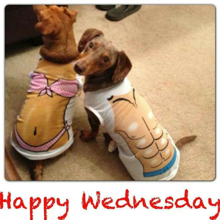 ♥Happy Wednesday | Doxie Love | Pinterest | See best ideas ...