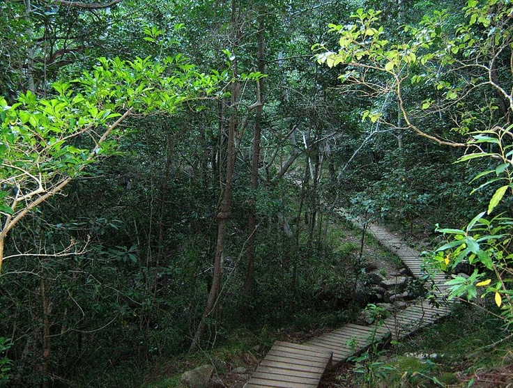 Woodcutters path through indigenous woodland - Newlands Forest Cape Town. I will find this path and I will hike it!