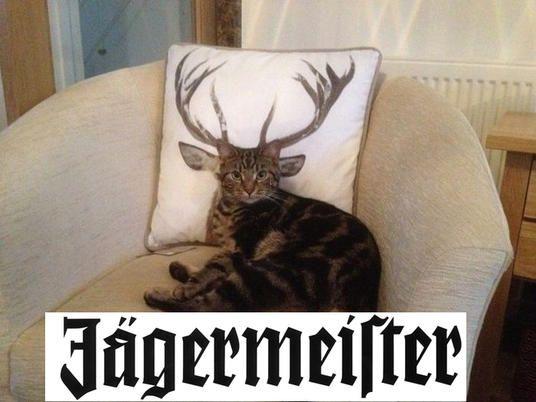 Jägermeister                                                                                                                                                                                 Mehr