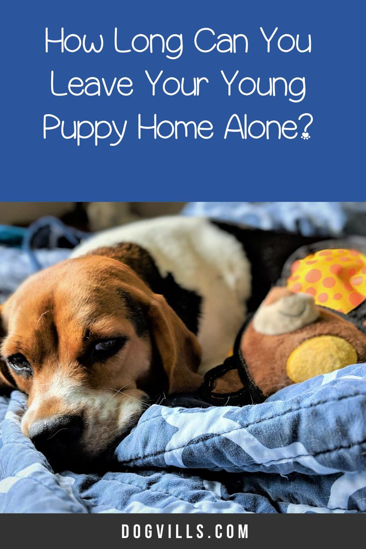 How Long Can You Leave Your Young Puppy Home Alone? in