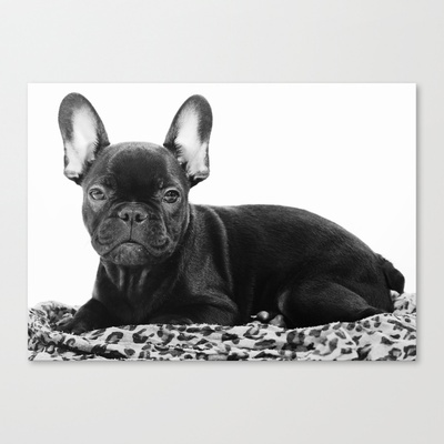 Französische Bulldogge Stretched Canvas by Falko Follert Art-FF77 - $85.00