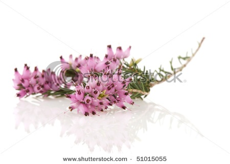 Heather for groomsmen's bouts (with lt pink lisanthus)