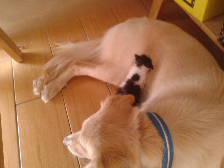 Tasia the cat, sleeps in the arms of Billie Jean the dog!