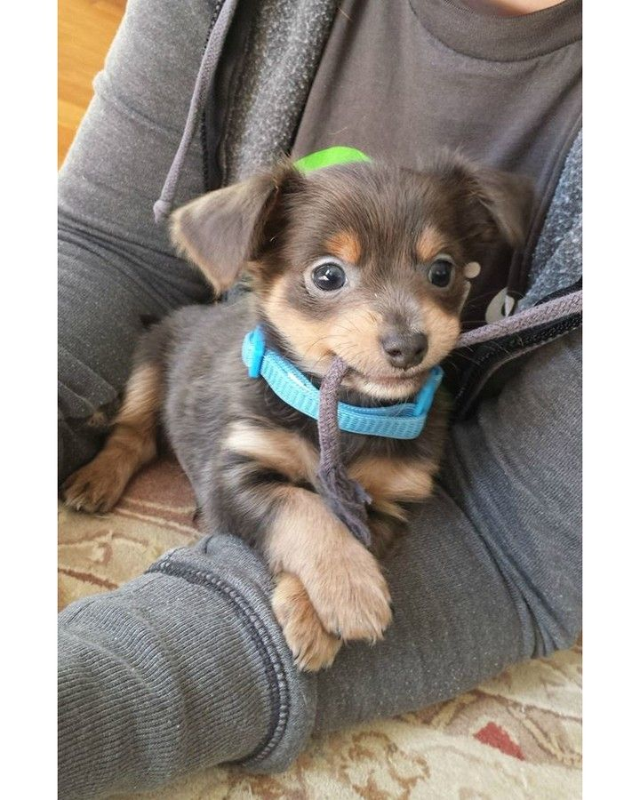 17 Best Ideas About Cute Dog Collars On Pinterest Dog