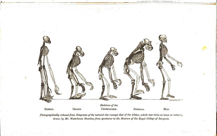 evolution primate intelligence Moved permanently the document has moved here.