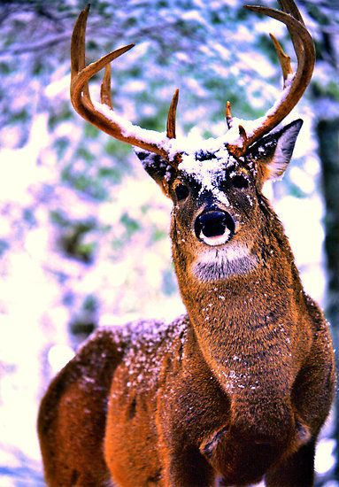76 Best images about Trophy Bucks on Pinterest | Deer ...