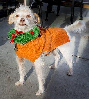 Dog, Christmas, Decoration, Canine