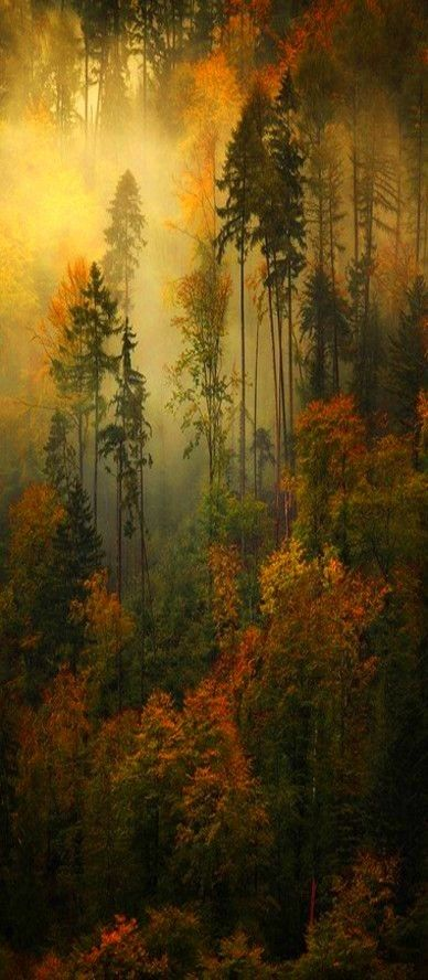 Beautiful view of the trees and fog. Woods