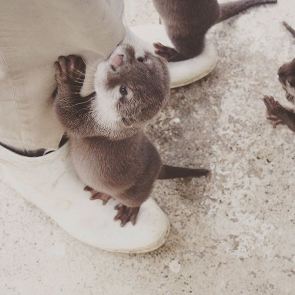 Human has an otter on each foot - February 9, 2017. Do you know Sea Otter I Rainbow Loves you.  ❤