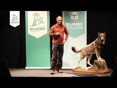 Samenvatting Blijdorp College 'De wolf in het wild'