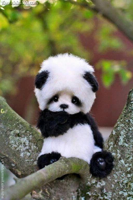 Fantastiques images de panda drôles, dont nous sommes témoins Fracksausen   – Süße Tiere