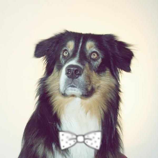 Nombres de perros machos. Si has decidido adoptar a un perro y estas buscando un nombre original y bonito, has entrado al sitio adecuado, en ExpertoAnimal te ayudaremos con una enorme variedad de ejemplos para...