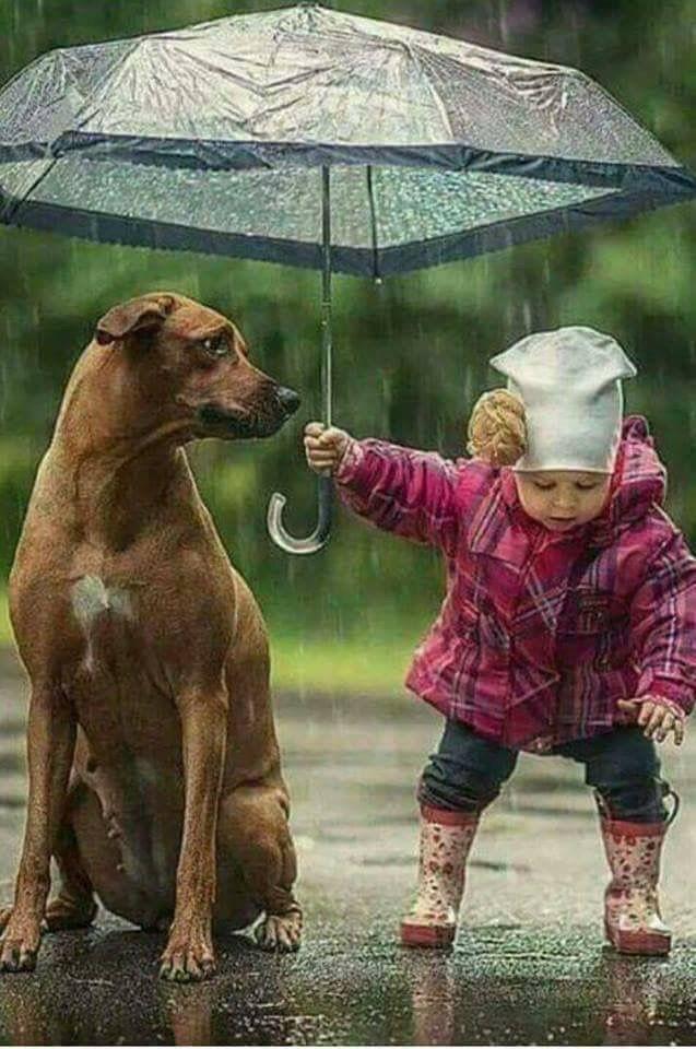 """Du kannst alles im Leben sein; … Aber in dem wichtigen Leben, """"Mensch"""" sein …  Du kannst alles im Leben sein; … Aber es ist wichtig, ein """"MENSCH"""" im Leben zu sein … Şems-i Tabrizİ"""