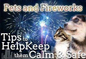 How To Help Pets Cope With Fireworks #Infographic