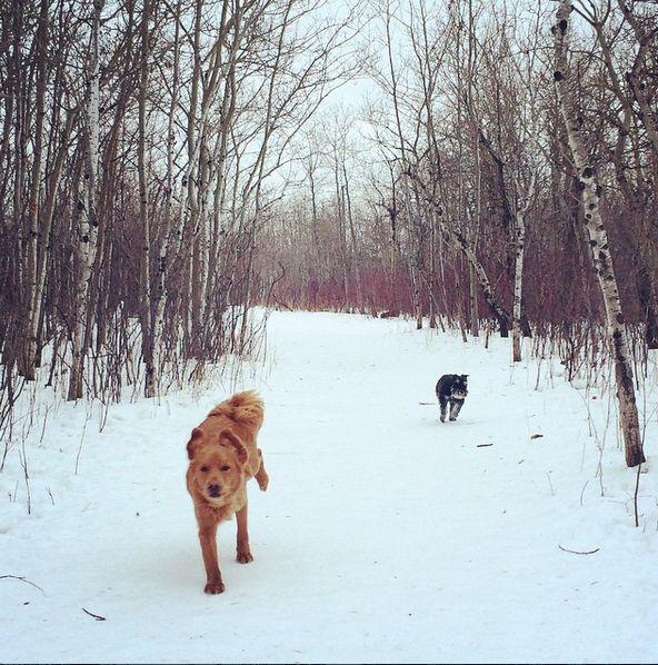 Running through Brenda Leipsic Park! - Winnipeg, MB - Angus Off-Leash