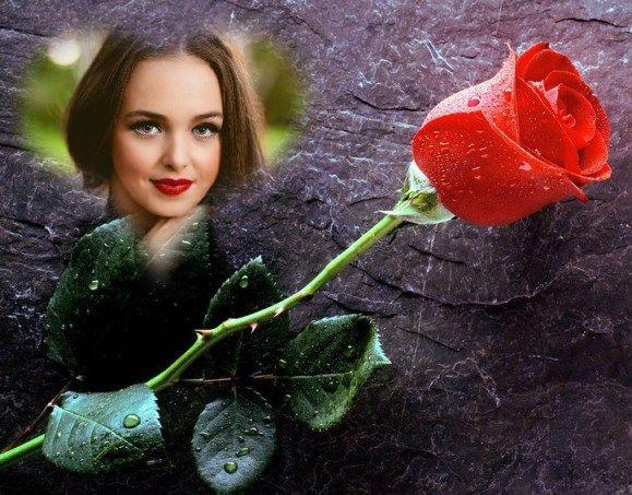 Romántico fotomontaje de rosa | Hacer Fotomontajes de Amor