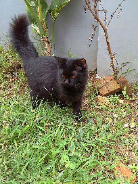 Kucing Hitam,,,,siapa takut?