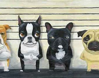 La Line Up 13 x 19 Boston Terrier Frenchie Carlino di rubenacker
