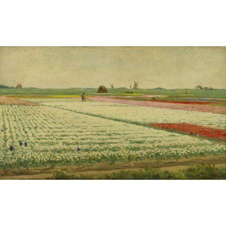Tulpenvelden (Tulip Field) Canvas Art - (24 x 18)