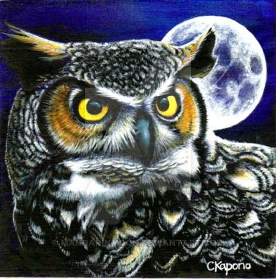 31 best painting owls images on pinterest painted owls for Night owl paint color
