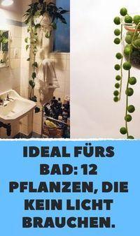 Ideal fürs Bad: 12 Pflanzen, die kein Licht brauc…