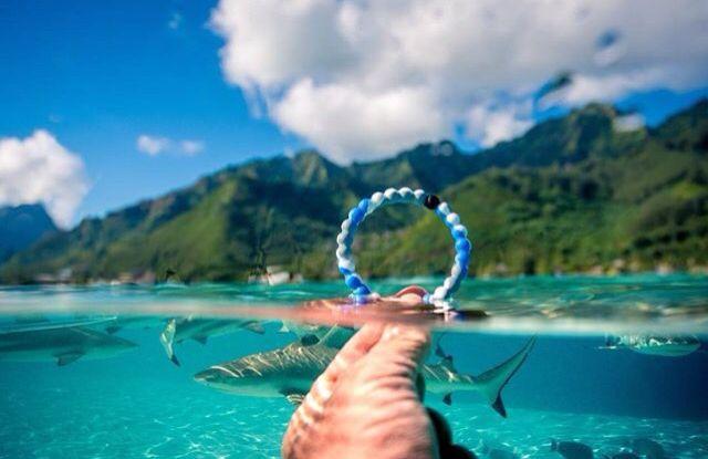the all new Shark Lokai bracelet for shark week!!!