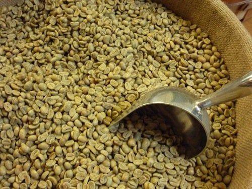 Wholesale Green Coffee Beans Bulk