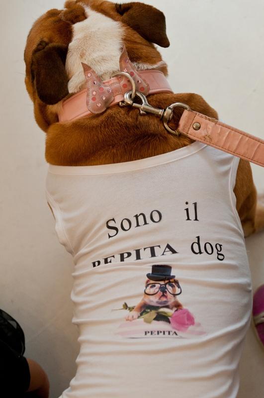 Ecco Camilla, la nostra Pepita dog. Abbiamo pensato anche alla t-shirt anche per il suo tempo libero!