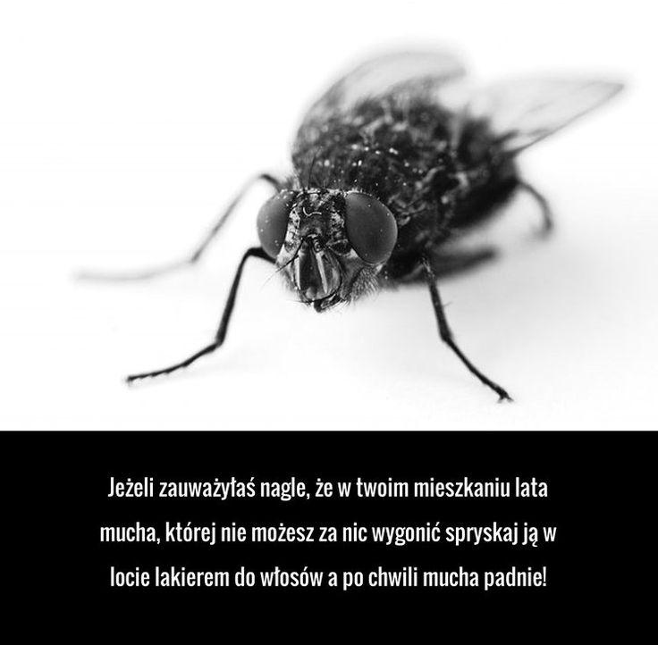 Sposób na pozbycie się  denerwującego insekta o którym nie wiesz!