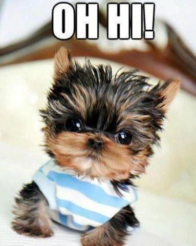 I want this dog and i'mma name it Mika aka Mikan Do Good ;)