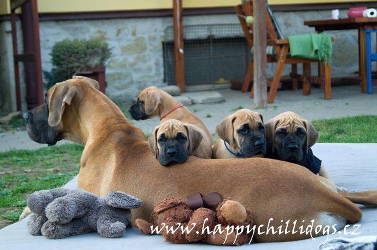 Happy Chilli Dogs