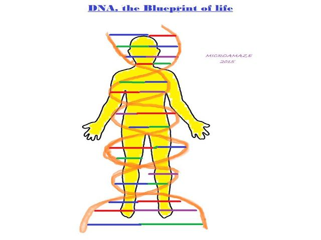 17 best Biotechnology images on Pinterest Biotechnology, Gout and - best of dna blueprint of life worksheet