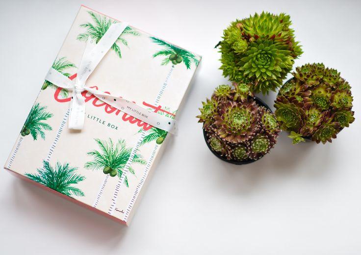 Coconut Box